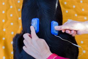 physiotherapie-hunde-2