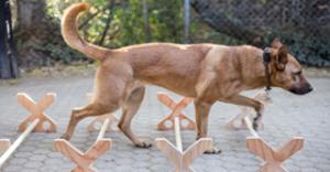 tierphysio-hunde